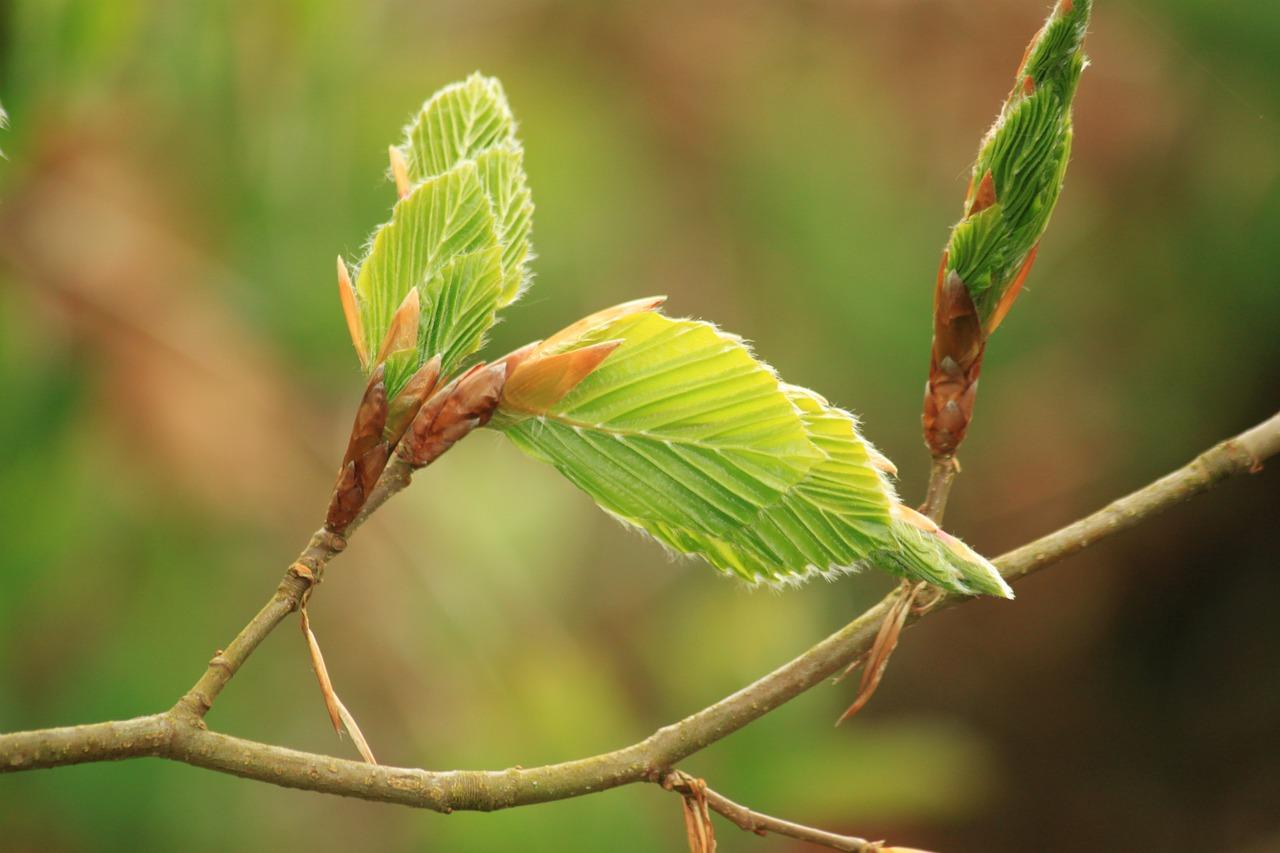 Pflanze gegen Ausschlag